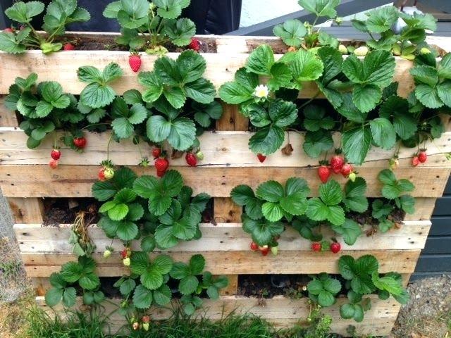 Orto verticale, la giusta estetica per la tua casa: quali piante scegliere?