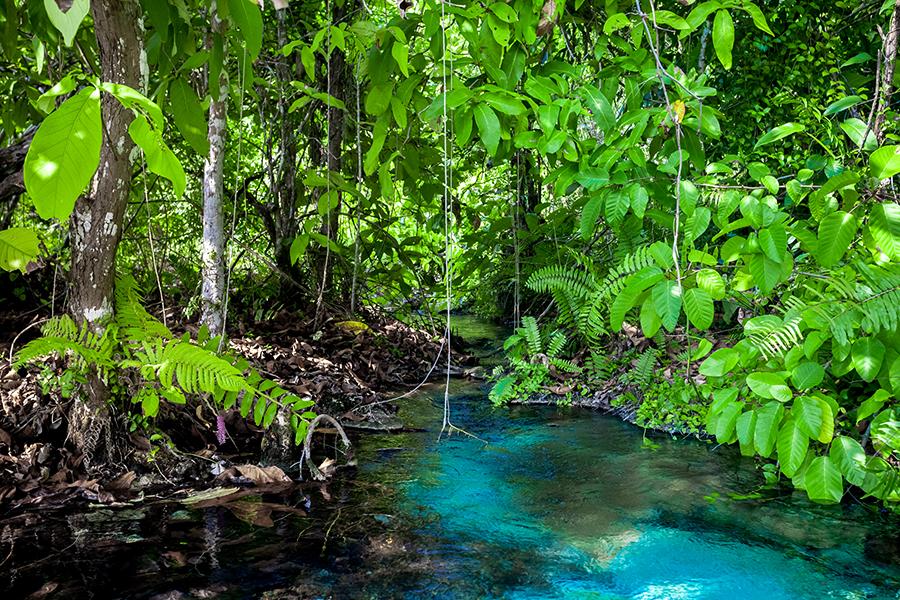 Servizi di riparazione piscine naturali a Cisterna di Latina pubbliche e private