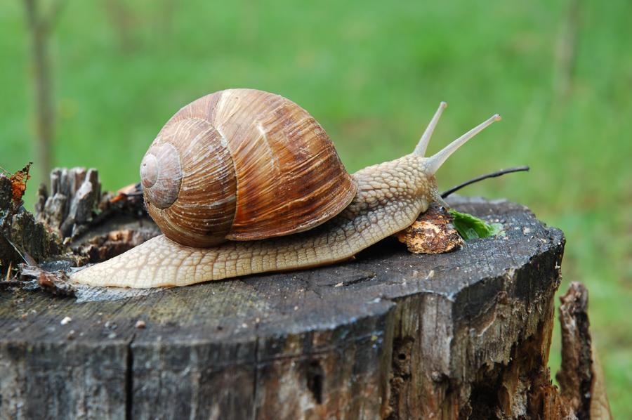 Allevamenti di lumache: tutto quello che forse non sai